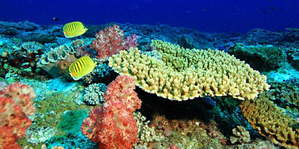 壁纸 海底 海底世界 海洋馆 水族馆 桌面 600_300
