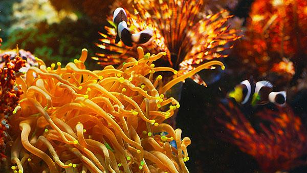 虾子和螃蟹则是甲壳动物的代表,它们有的栖住於珊瑚礁洞穴中,有的以图片